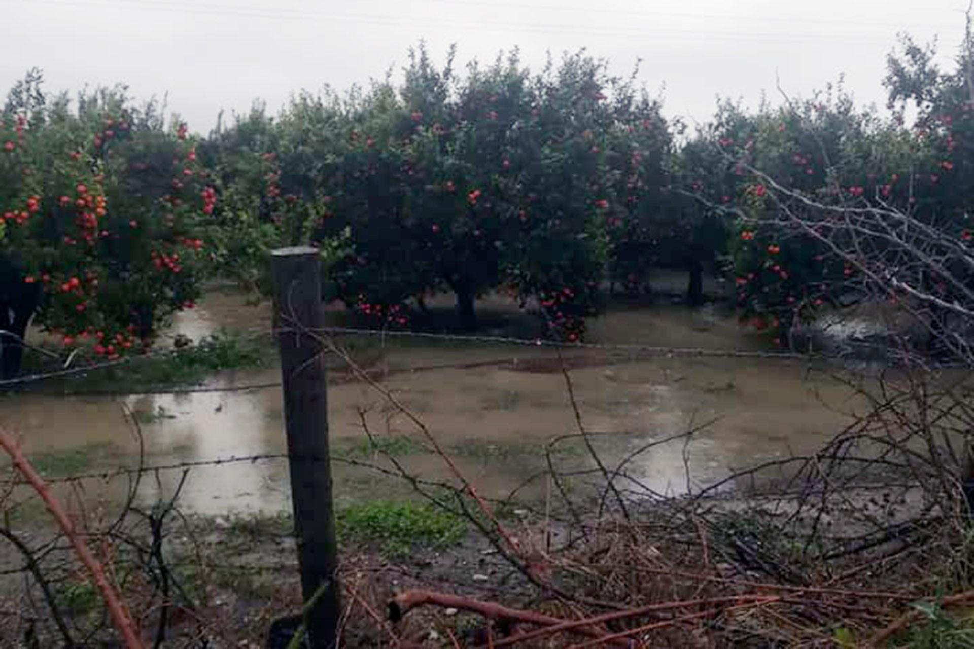 Adana'da sel sonrası tarım arazileri sular altında kaldı