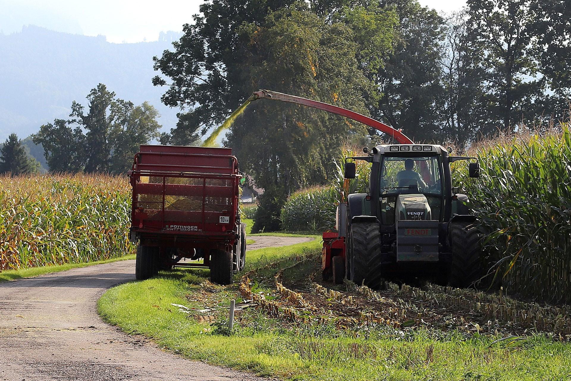 Hasat yapan traktör