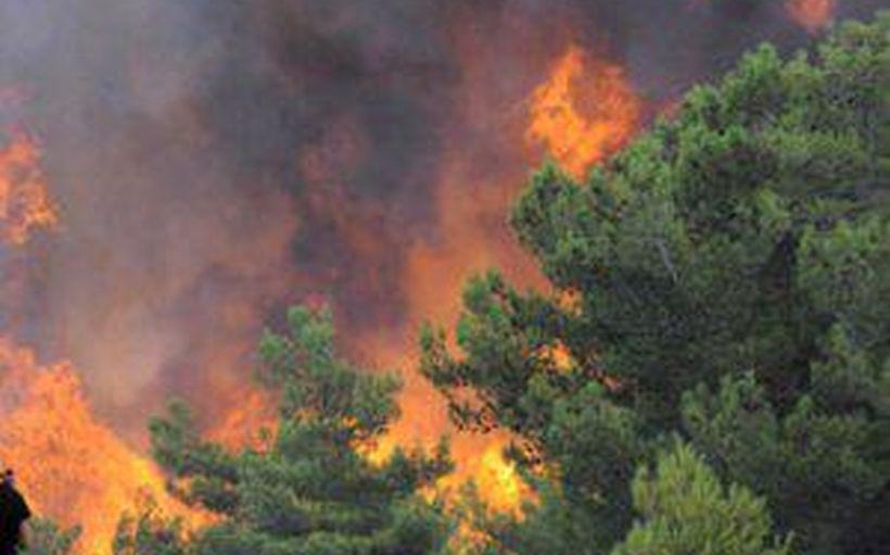 Köyceğiz'de orman yangını