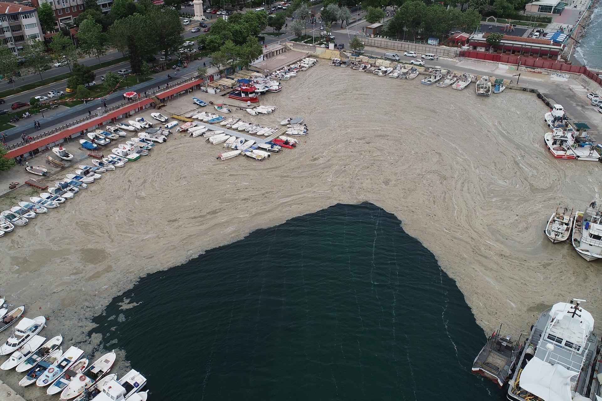Deniz salyası limanı basmış