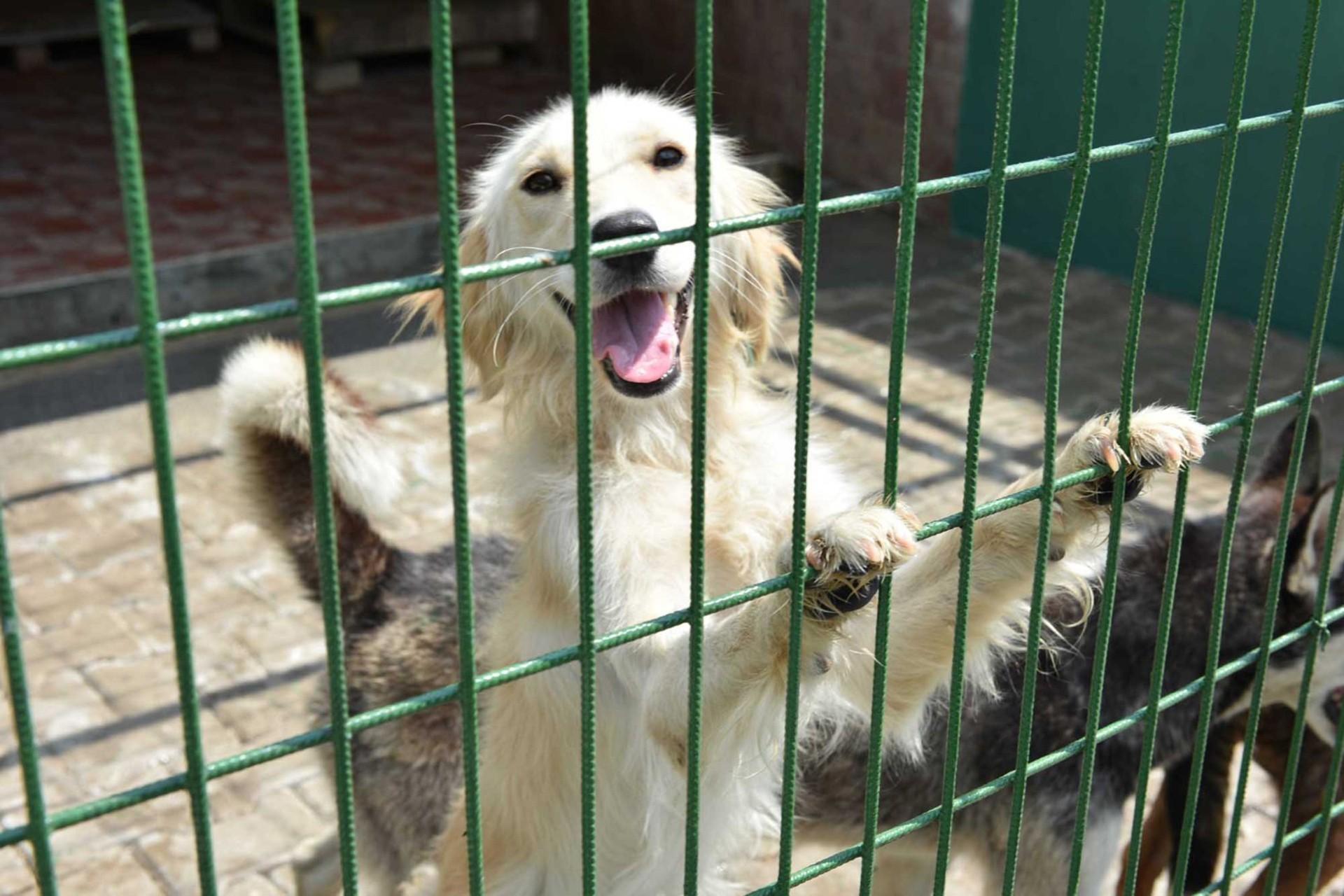 Teller ardından beyaz bir köpek