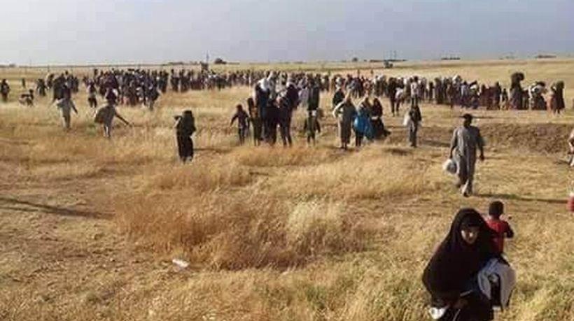 IŞİD, Akçakale sınırında 100'e yakın sivili katletti