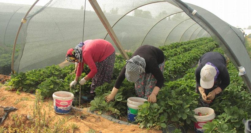 HDP tarım işçilerinin umudunu yeşertti