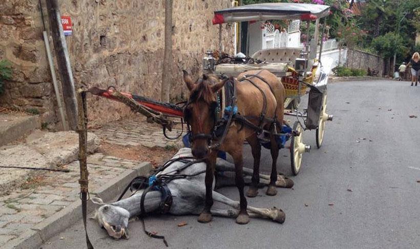 'Faytona binme, atlar ölüyor'