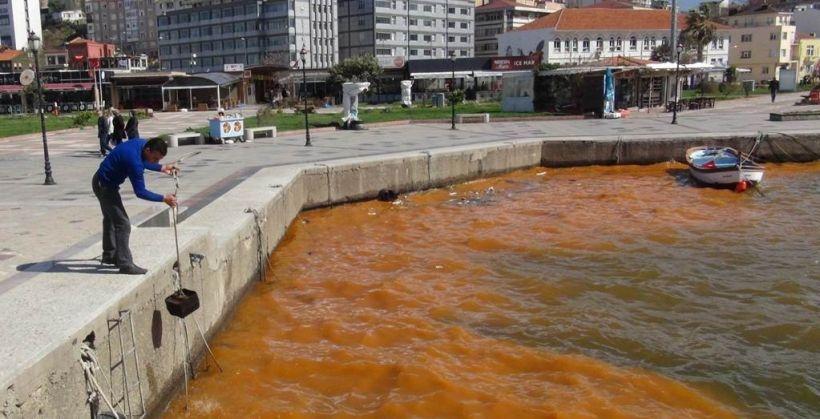 Bandırma'da alg patlaması denizin rengini değiştirdi