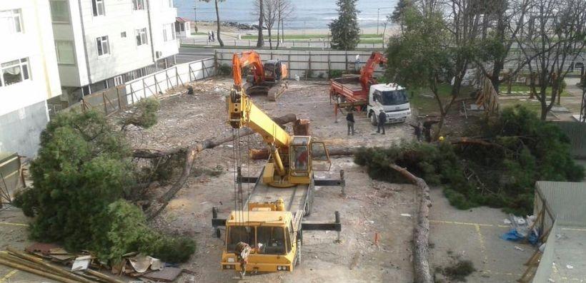 Otel için ağaçları kestiler