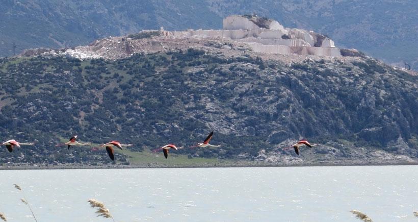 Mermer ocakları flamingoları kaçırdı