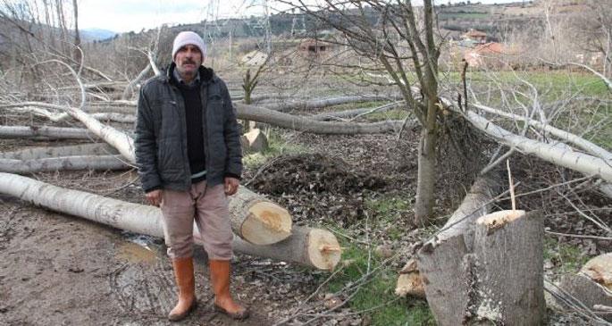 Yüksek gerilim hattı için 240 ağaç kesildi