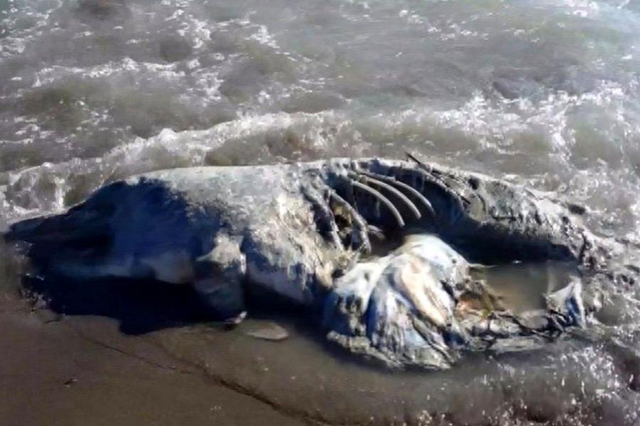 Seyhan Nehri'nin denize döküldüğü noktada balık ölümleri