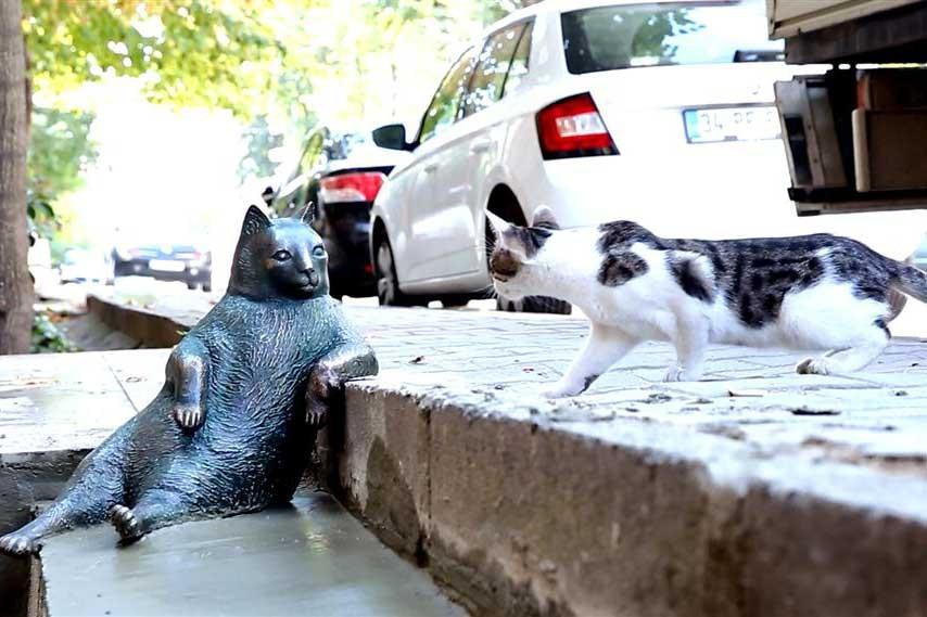 Kadıköy'ün bıçkın kedisi Tombili'nin heykeli yarın açılıyor
