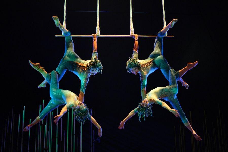 Dünyaca ünlü sirkin malzemelerine gümrükte el kondu