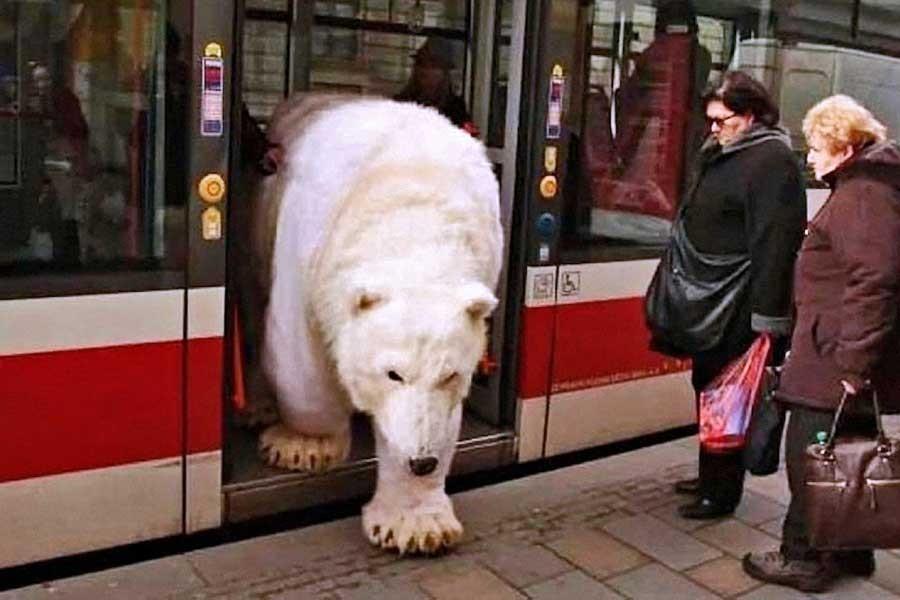 Hayvan taşıma yasası otobüse binemiyor