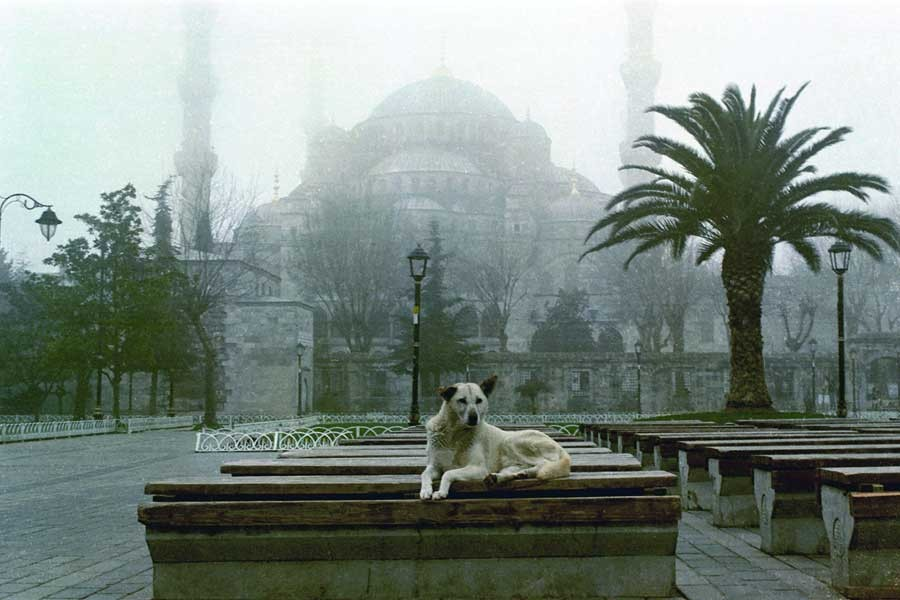 Sokak köpekleri: İstanbul kent tarihinin asli unsurları