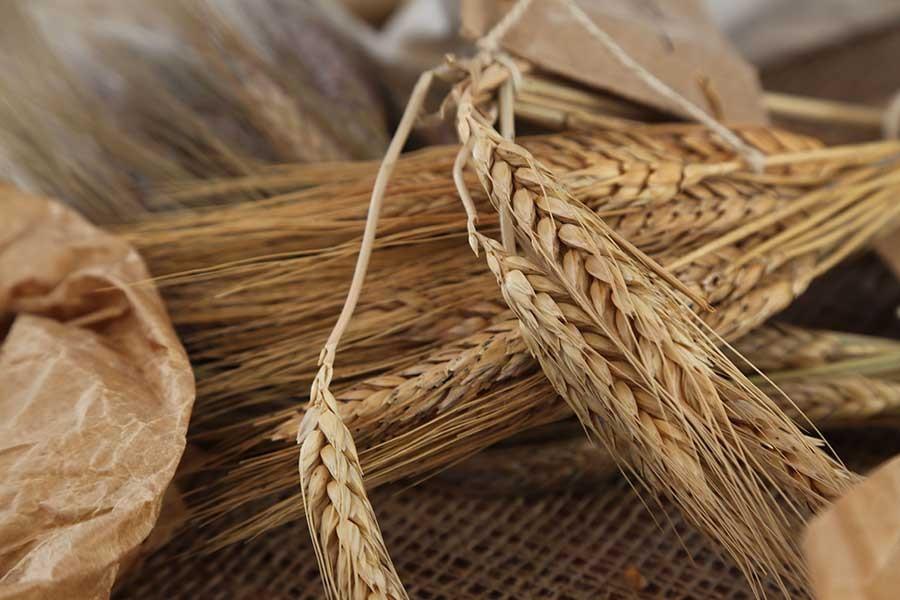 Dördüncü tohum takas şenliğiyle tohumlar geleceğe aktarıldı