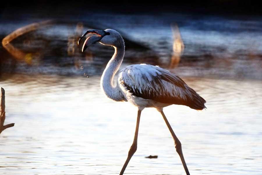 Tuzla Sulak Alanı'nda kirlilik ve kaçak avlanma tehlikesi!
