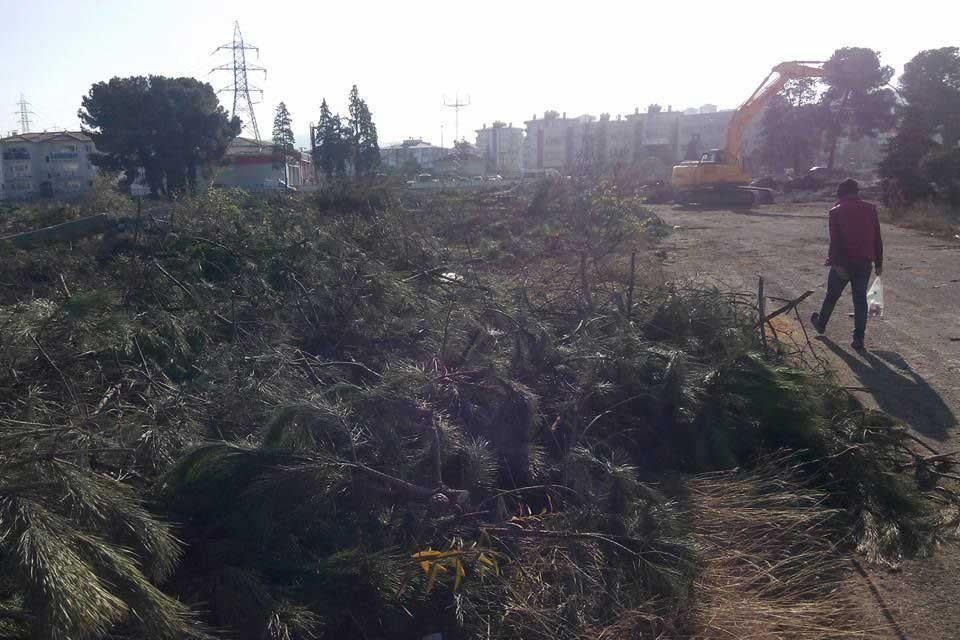 Ordu'da bina yapmak için ağaçlar kesildi