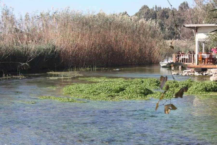 Azmak Gölü'nde yaşam yok oluyor!