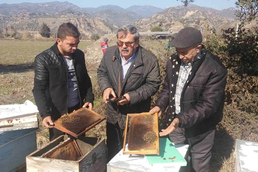Aydın Ovasında arı tabutları…