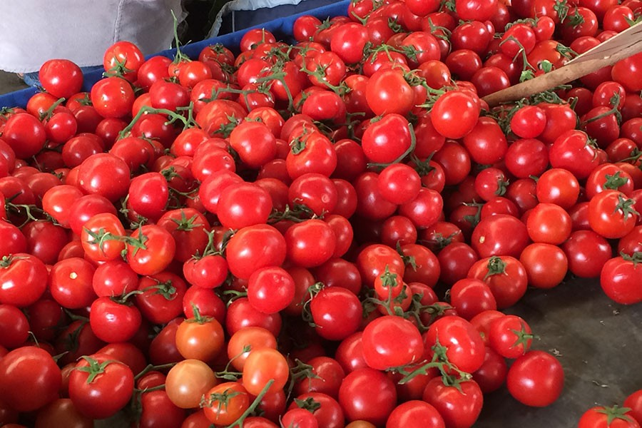 Torbalı'dan dünya pizzalarına kurutulmuş domates