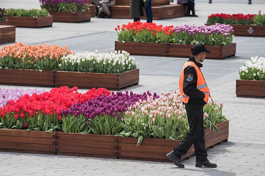Hollanda'dan ithal edilen çiçekler devlet sırrı oldu!