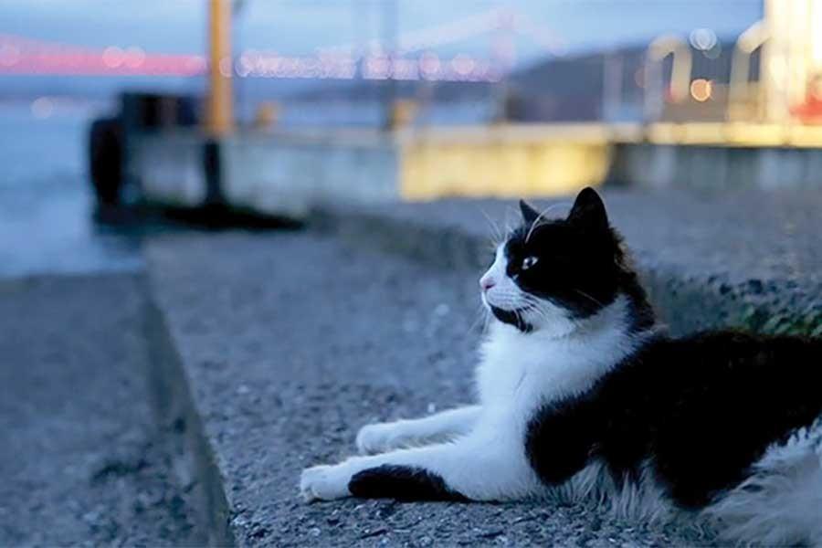 'Kedi' 9 Haziran'da gösterime girecek