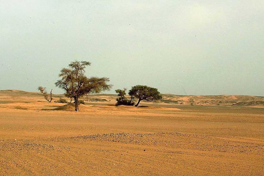 Sahra Çölü'nde 3'ü bebek 44 göçmen susuzluktan öldü!
