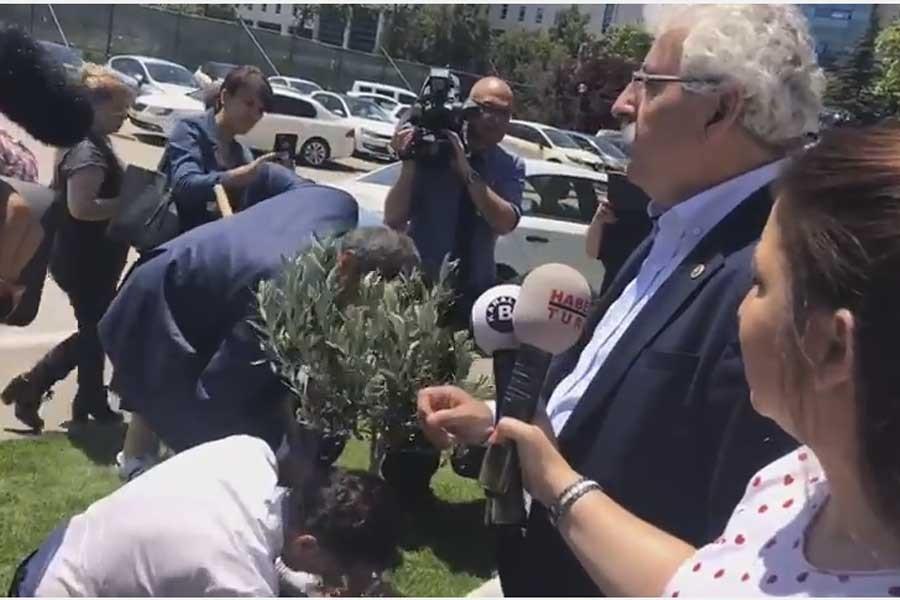 CHP'li vekiller meclis bahçesine zeytin dikti