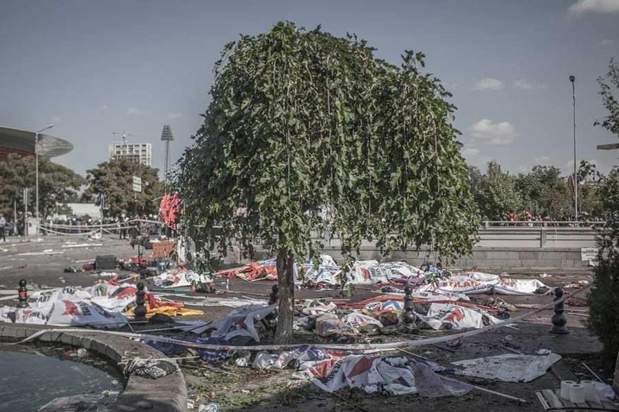FotoYorum: Ağaçlar bile ağlıyor...