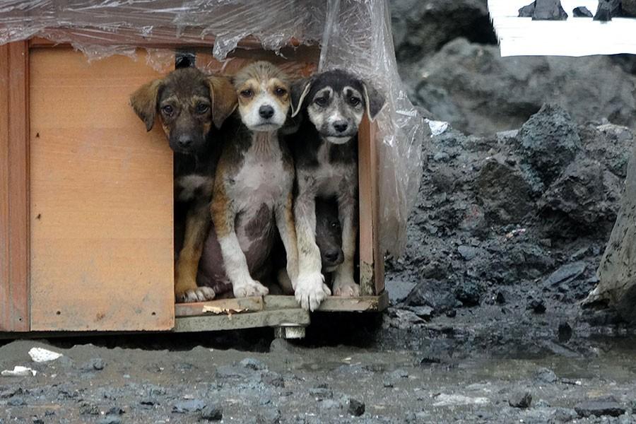 Yavru köpekler taş ocağına terk edildi