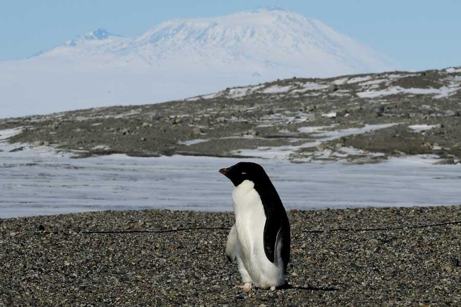 Bitki ve böcek işgali Antarktika'yı tehdit ediyor