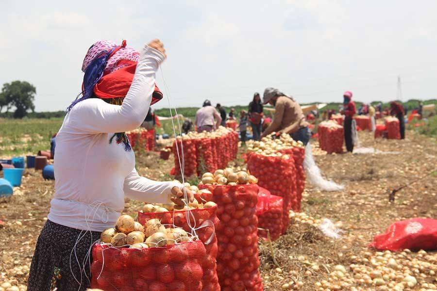 CHP'li Sarıbal: Tarım bitiriliyor, haberiniz var mı?