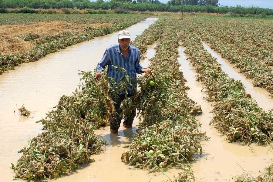 Manavgat'ta yağmur üreticiyi vurdu