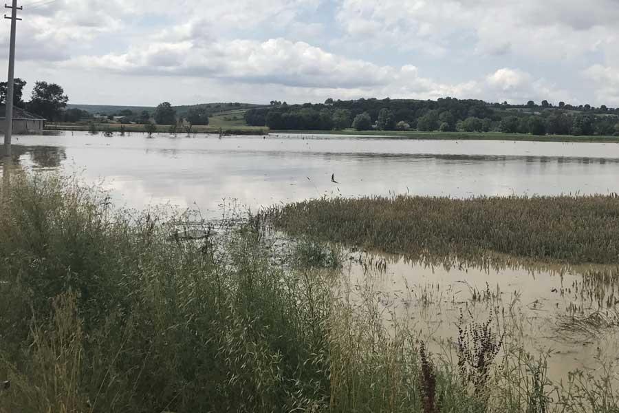 Sakarya'da tarım arazileri sular altında kaldı