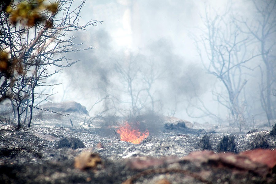 Bodrum'da 1 hektarlık makilik alan kül oldu