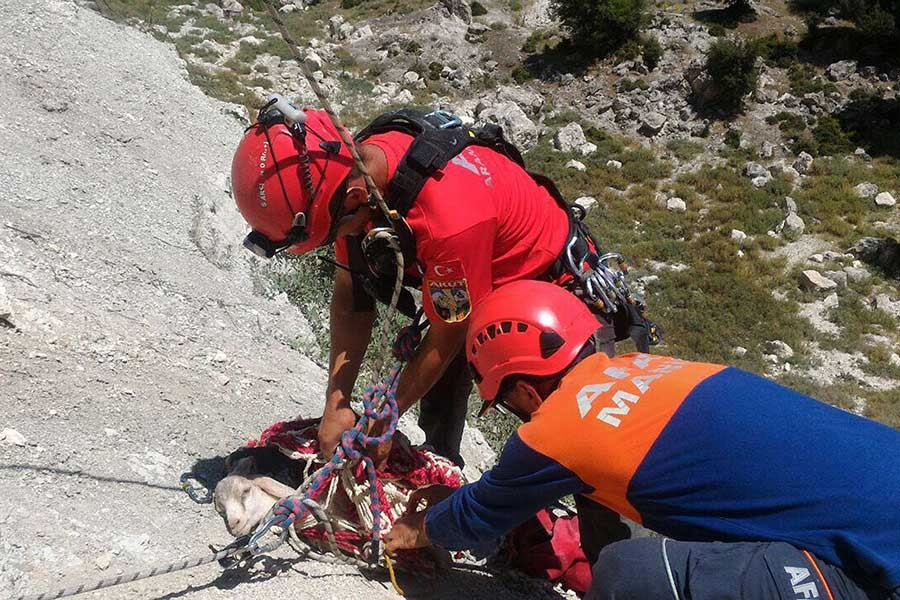 Kayalıklarda mahsur kalan 2 yavru keçi kurtarıldı
