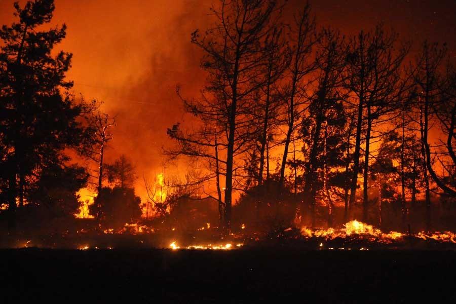 Datça'da 'manidar' orman yangını