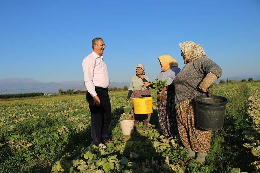 Sertel: Patates üreticisi maliyetinin altına satış yapıyor