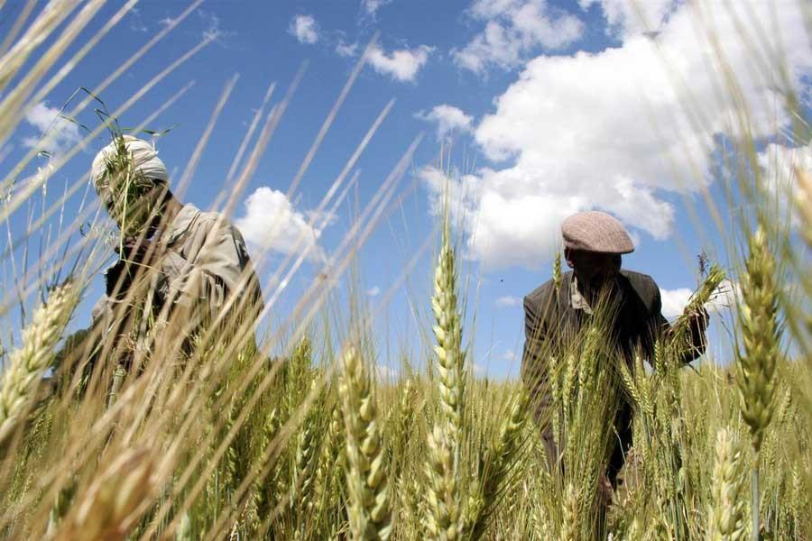 Tarım politikaları, şirketler lehine belirleniyor