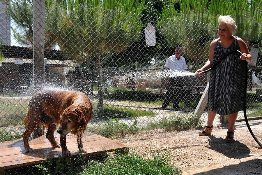 Hayvan barınağında sıcaklara sulu çözüm