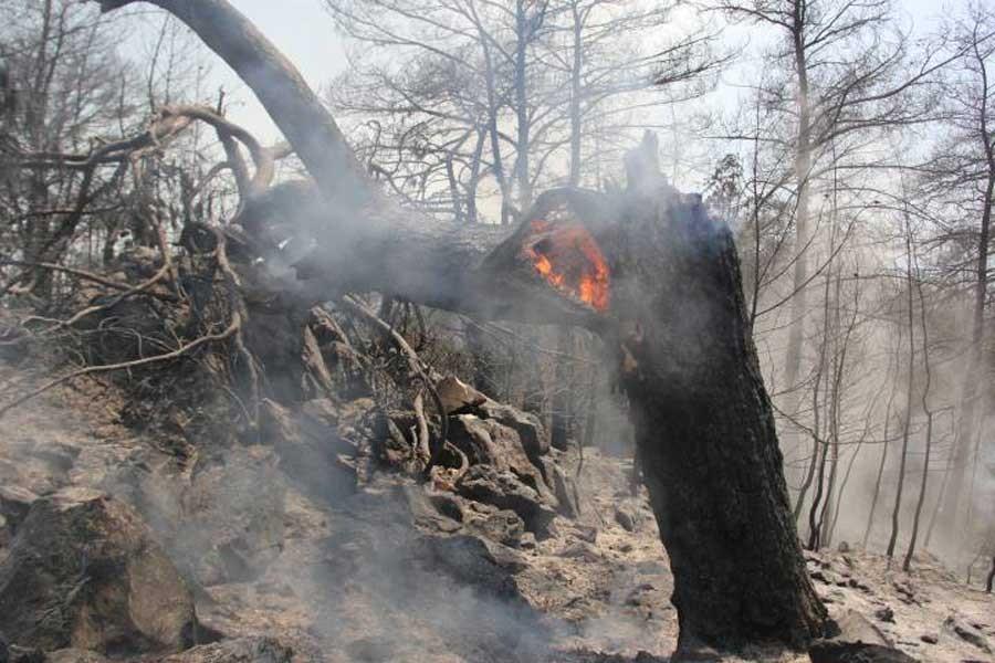 İzmir'deki orman yangını üçüncü gününde sürüyor