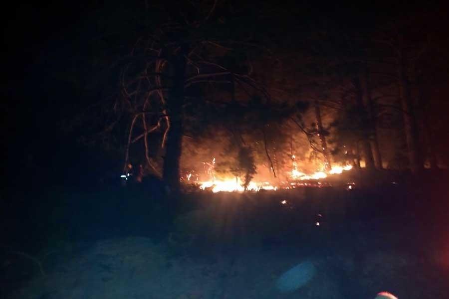 Bergama'da orman yangını: 10 hektarlık alan zarar gördü