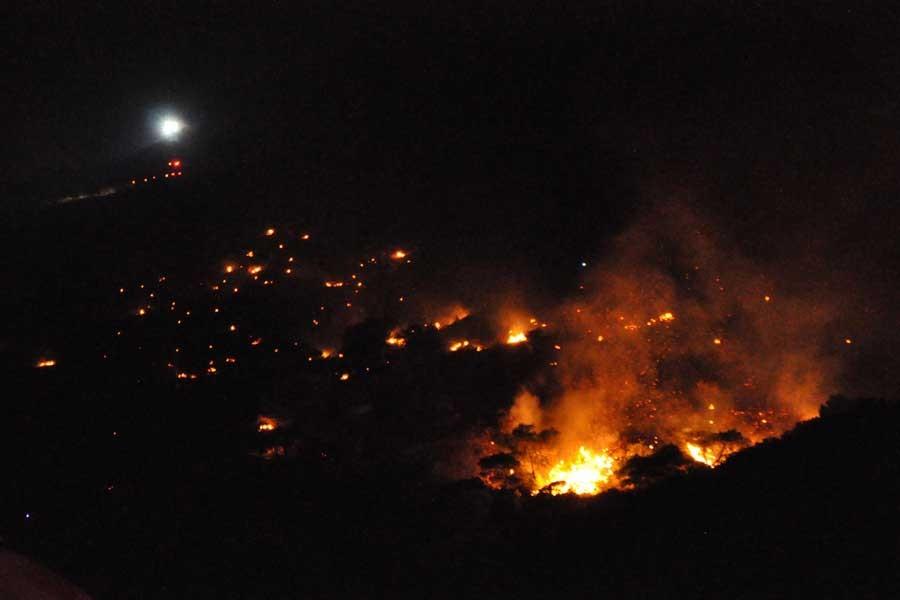 İzmir'de orman yangını: 5 hektarlık alan yandı
