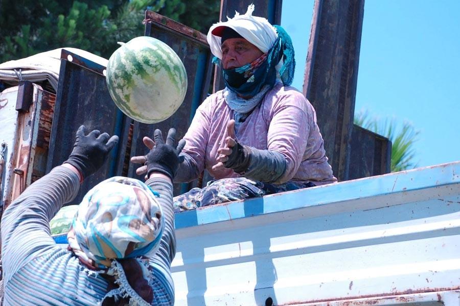 Tarım işçisi kadınlar, 50 lira için günde 12 saat çalışıyor