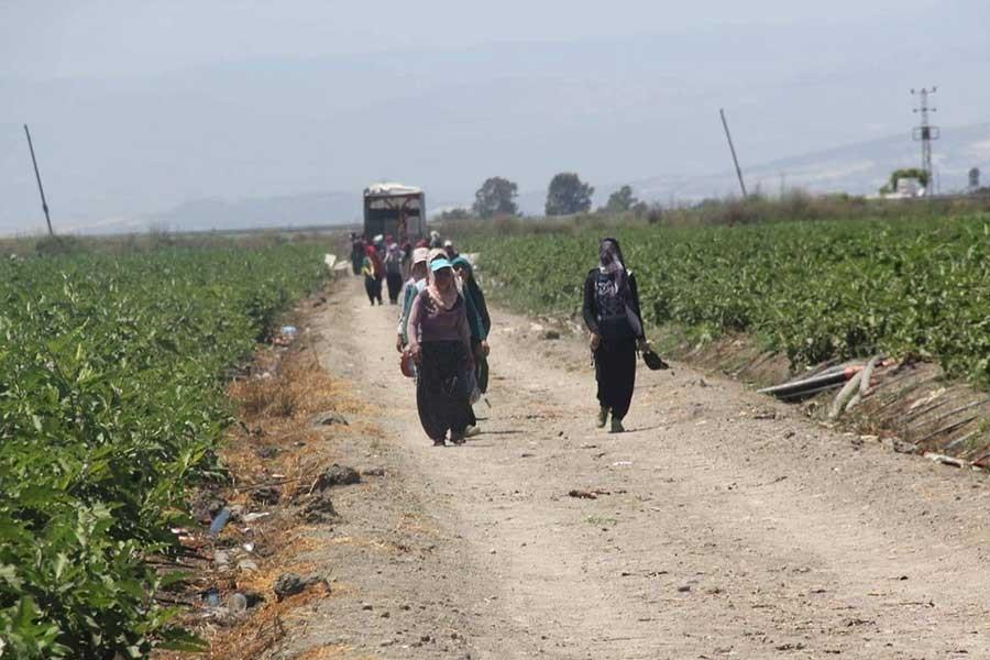 Tarım işçisi kadınlar: Tarlada köle gibi çalışıyoruz