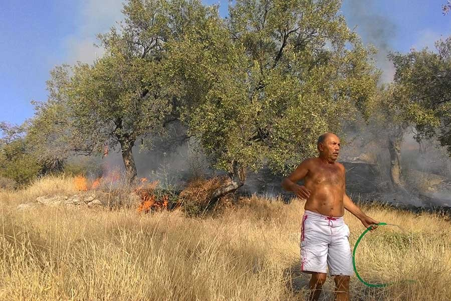 Dikili'de yangın çıktı, 30 dönümlük zeytinlik kül oldu