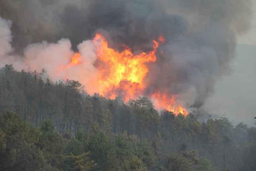 Yangın için tuhaf önlem: Ormanlara giriş yasak