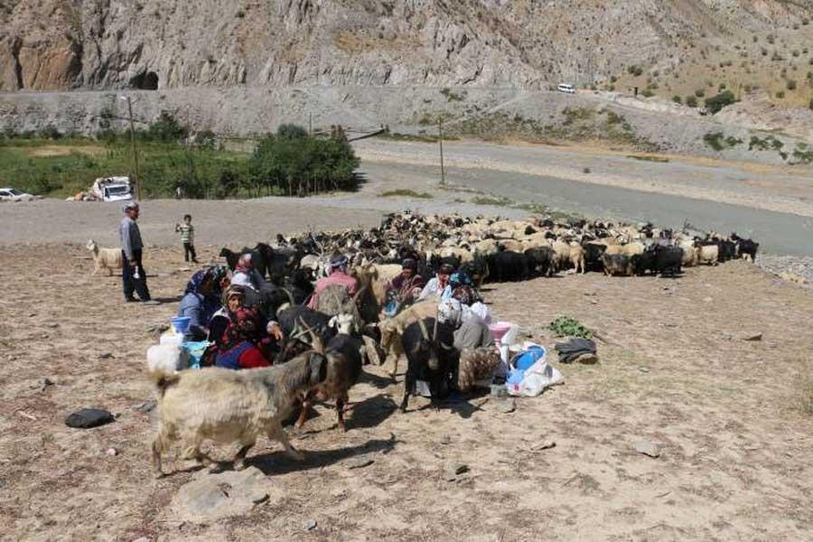Köylüler tedirgin: SİHA korkusundan yayladan indiler