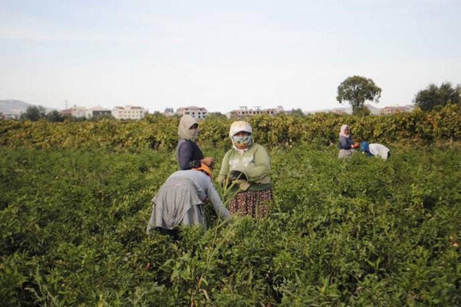 Mevsimlik işçiler dönüyor: 3 kuruş parayla kışı geçirecekler