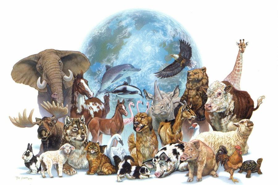 4 Ekim Hayvanları Koruma Günü: Yasa, hayvanları korumuyor