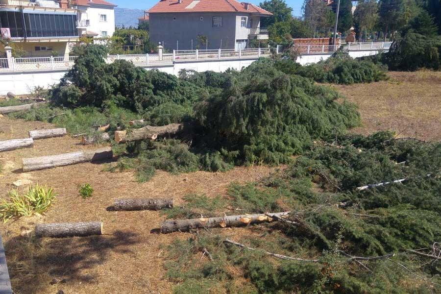 Meteoroloji 'ölçümleri iyi yapma' gerekçesiyle ağaç kesti